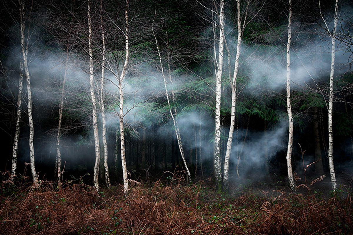 Ellie Davies, Between the Trees 2, 2013, Courtesy of Crane Kalman Brighton