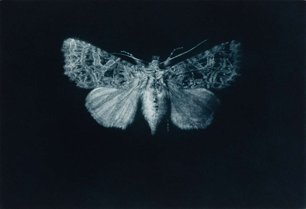 8 Sarah Gillespie^Campion Moth^Mezzotint^3800x2800^538265 copy